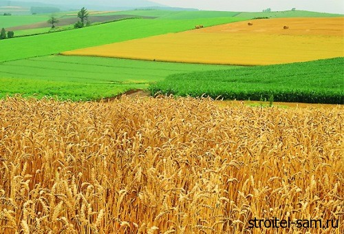 земля для сельхозназначения